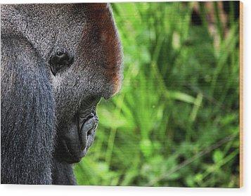 Gorilla Portrait Wood Print by Dan Pearce