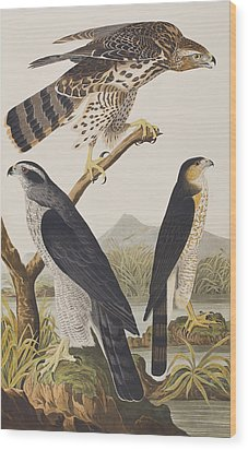 Goshawk And Stanley Hawk Wood Print by John James Audubon
