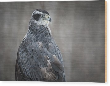 Goshawk Wood Print by Angie Rea