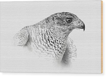 Goshawk Wood Print