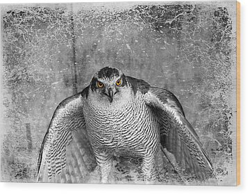 Goshawk Wood Print by Fiona Messenger