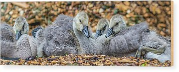 Goslings Wood Print by Irwin Seidman