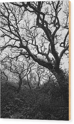 Gothic Woods II Wood Print
