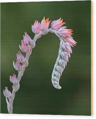 Wood Print featuring the photograph Graceful by Elvira Butler