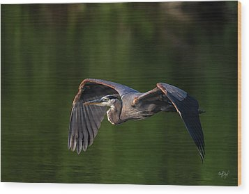 Wood Print featuring the photograph Graceful Flight by Everet Regal
