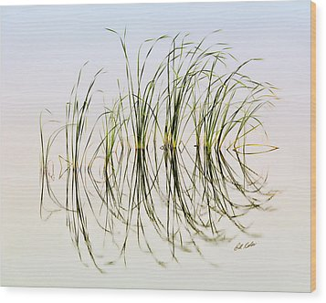 Graceful Grass Wood Print by Bill Kesler