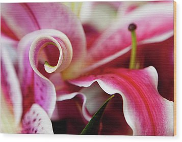 Graceful Lily Series 25 Wood Print by Olga Smith