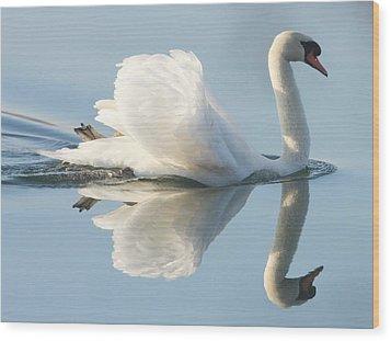 Graceful Swan Wood Print by Andrew Steele
