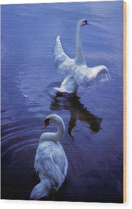 Graceful Swans Wood Print