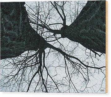 Graet Oaks Wood Print by Debra     Vatalaro