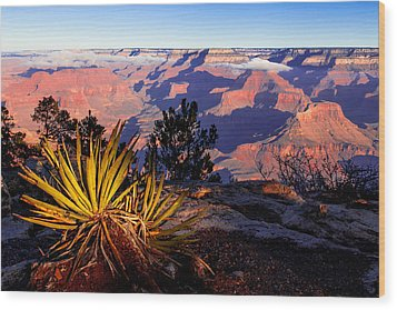 Grand Canyon 31 Wood Print by Donna Corless