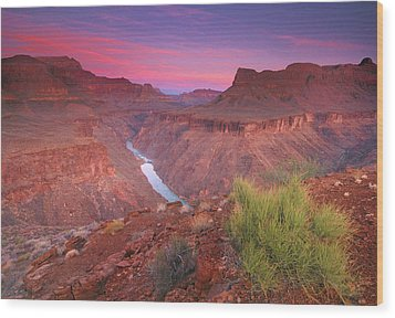 Grand Canyon Sunrise Wood Print by David Kiene