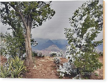 Grand Canyon Through The Trees Wood Print