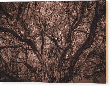 Wood Print featuring the photograph Grand Daddy Oak Tree In Infrared by Louis Ferreira