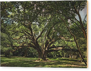 Grand Oak Tree Wood Print by Judy Vincent