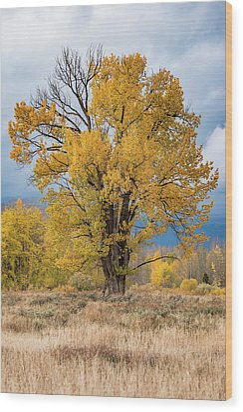 Grand Old Tree Wood Print
