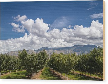 Grand Valley Orchards Wood Print by Teri Virbickis
