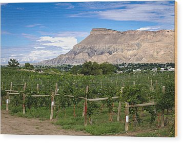 Grand Valley Vineyards Wood Print