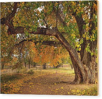 Grandfather Cottonwood Wood Print by Tim Reaves