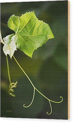 Grape Vine Wood Print by Christina Rollo
