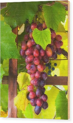 Grape Vine Wood Print by Utah Images