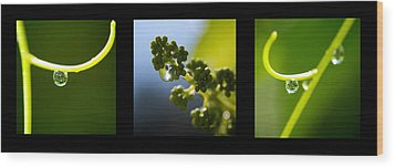 Grape Vines And Water Drops Triptych Wood Print by Lisa Knechtel