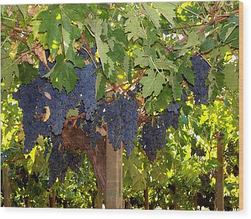 Grapes Are Ready Wood Print
