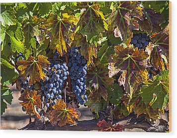 Grapes Of The Napa Valley Wood Print by Garry Gay