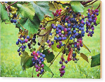 Grapes Of Wrath Wood Print by Karen Scovill