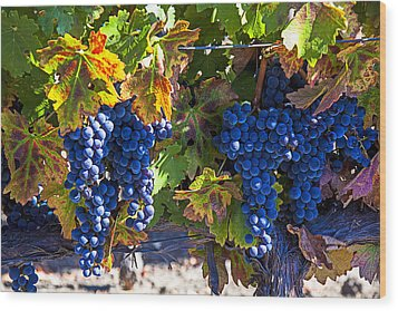Grapes Ready For Harvest Wood Print by Garry Gay
