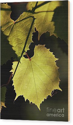 Grapevine In The Back Lighting Wood Print by Michal Boubin