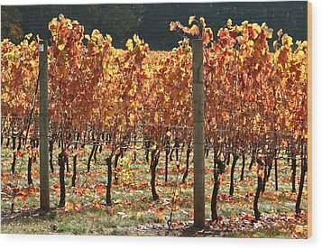 Grapevines After The Harvest Wood Print by Margaret Hood