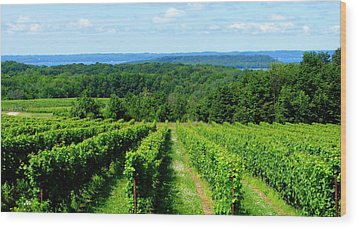 Grapevines On Old Mission Peninsula - Traverse City Michigan Wood Print by Michelle Calkins