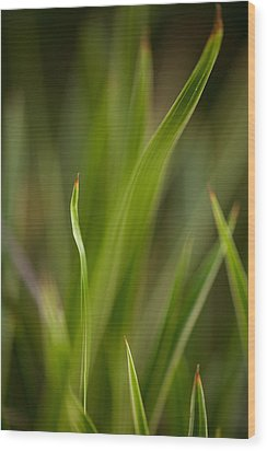 Grass Abstract 1 Wood Print by Mike Reid