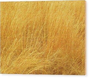 Grass Shades Wood Print by Kim Zwick