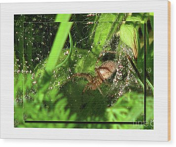 Grass Spider Wood Print by Deborah Johnson