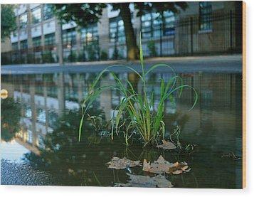 Grass Sprout Wood Print by Brynn Ditsche