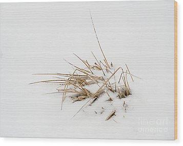 Grass Vignette Wood Print by Fred Lassmann