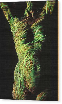 Grasses Wood Print by Arla Patch