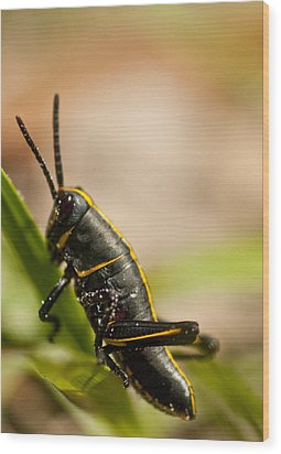 Grasshopper 2 Wood Print by Anthony Towers