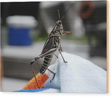 Dancing Grasshopper At The Pool Wood Print