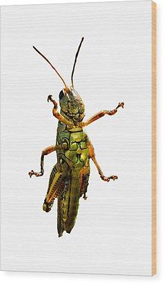 Grasshopper II Wood Print
