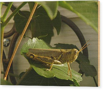 Grasshopper Wood Print by John Julio