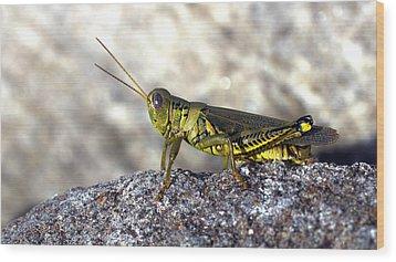 Grasshopper Wood Print by Joseph Skompski