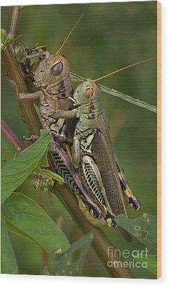 Grasshopper Sex Wood Print by Warren Sarle