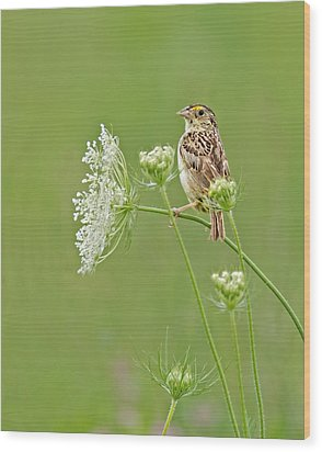 Grasshopper Sparrow Wood Print