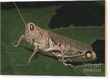Grasshopper Wood Print by Warren Sarle
