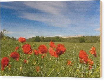 Wood Print featuring the photograph Grassland And Red Poppy Flowers by Jean Bernard Roussilhe