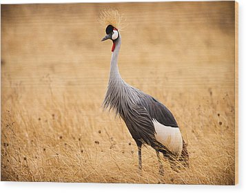 Gray Crowned Crane Wood Print by Adam Romanowicz