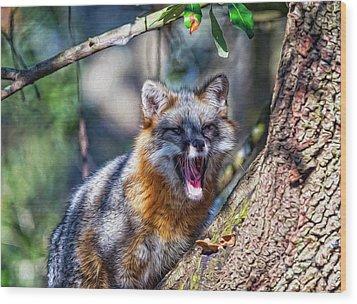 Gray Fox Awakens In The Tree Wood Print